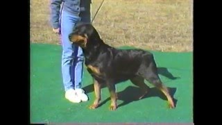 Von Ross Rottweilers  How to Select a Rottweiler Puppy and Develop a Champion