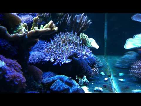 Flirty Fish And A. Lokani
