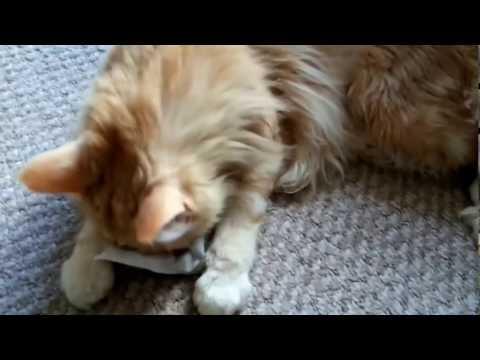 Katzen-Video ganz niedlich und süß