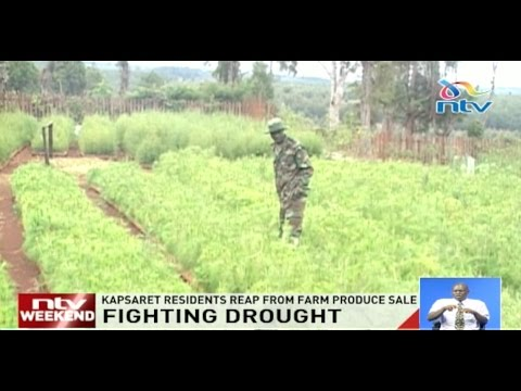 Fighting drought: Kapsaret residents reap from farm produce sale