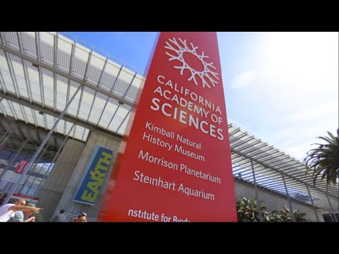 Building of Wonders | California Academy of Sciences
