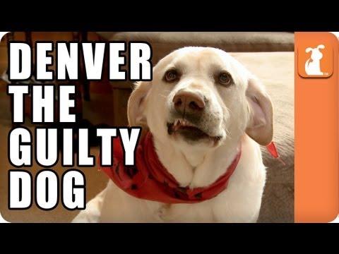 Denver The Guilty Dog Video