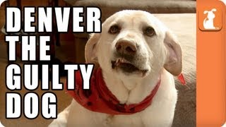 Denver the Guilty Dog - Memed