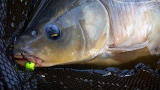 КАРП УТАЩИЛ ФИДЕР на 16 52 Рыбалка на карпа и карася на флэт метод Карпфишинг Кладка Михалыча ч2