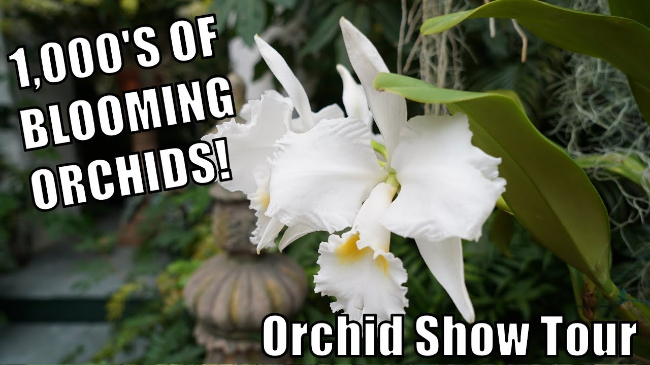 Orchids tropical plants everywhere 2019 orchid show at - Orchid show missouri botanical garden ...