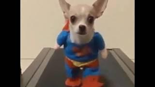 Собака думает она супер герой