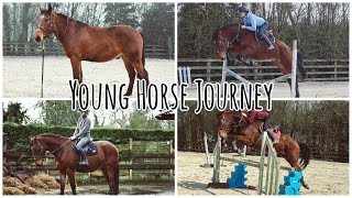 BREAKING IN MY HORSE // From unbroken to first jumps