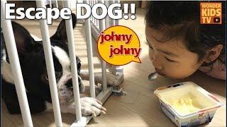 누가 개를 풀어놨어? 조니조니? johny johny who let the dogs out! 재이와 지수 프랜치불독을 만나다!