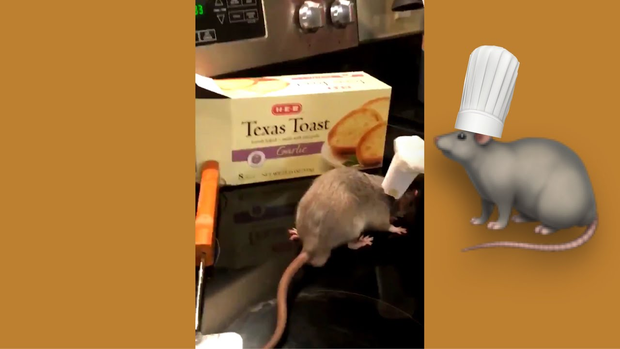 Real Life Ratatouille Youtube
