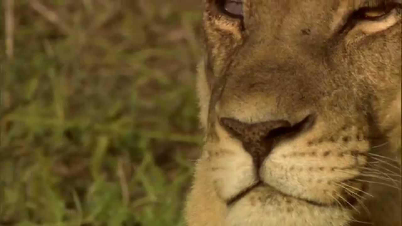how to make a short wildlife documentary