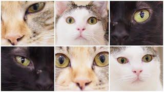 NyankuruTV Vol.36  にゃんくるTV Vol.36 【かわいい猫カフェ/保護猫】【Cute Cat Cafe】