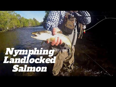 Maine Fly Fishing | Nymphing Ultra Clear Water For Landlocked Salmon
