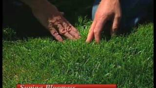 How To Choose A Cool-Season Turfgrass Variety