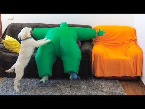Puppy Dances w/Man in Chub Suit | Funny Dog Bailey