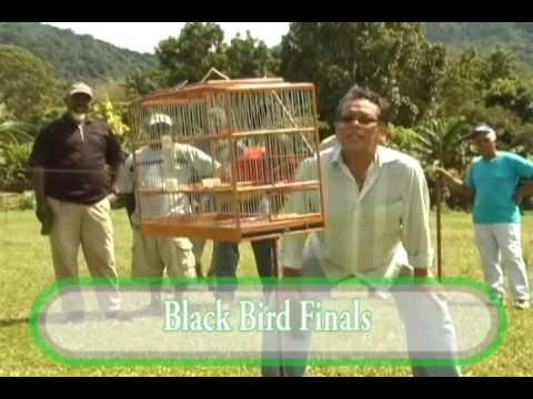 Bullfinch finals Trinidad and Tobago