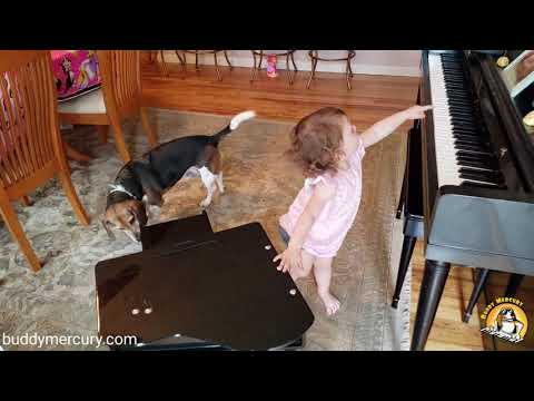 Lisa St. Regis - Buddy The Dog and His Human Sister Perform Piano Jam Duet