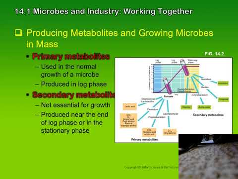 chapter 14 industrial microbiology