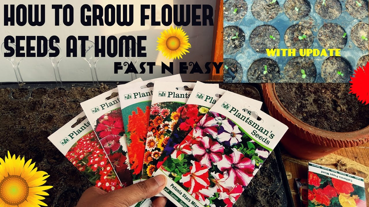 How to grow flower seeds fast with update youtube how to grow flower seeds fast with update izmirmasajfo