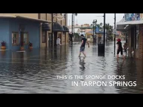 Digital Short: Hide tide and rain in Sponge Docks in Spring Hill