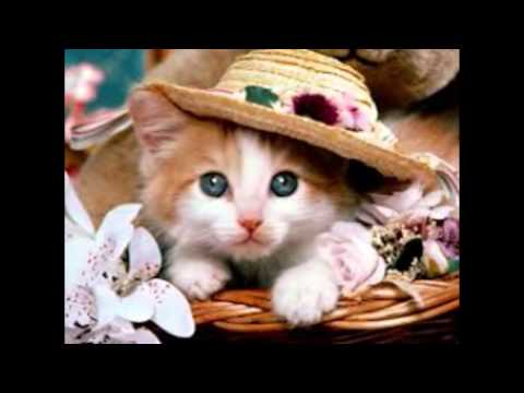 Top 10 beautiful cats : cutest cat breeds