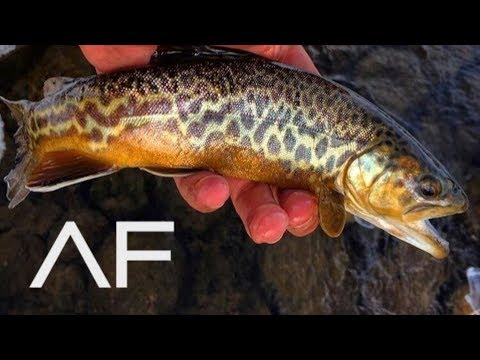 I CAUGHT A TIGER TROUT!!! WOODS CANYON LAKE, ARIZONA FISHING