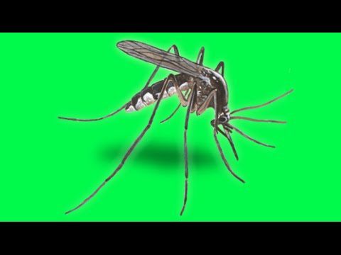 GMO Mosquitoes in Florida!?