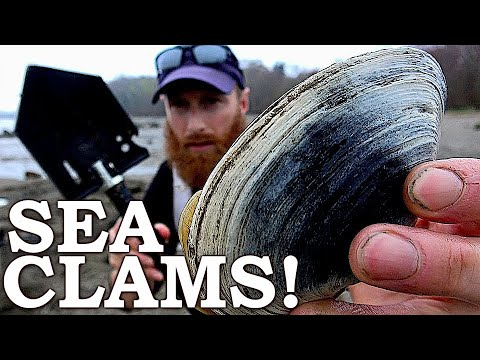 Catch n Cook MONSTER SEA CLAMS  in Survival Challenge | Wilderness Survival Challenge Day 2 of 7