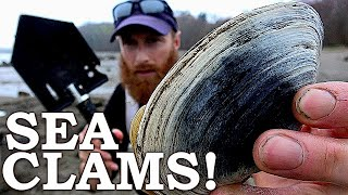 Catch n Cook MONSTER SEA CLAMS | 100% WILD Food SURVIVAL Challenge