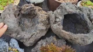 제주 현무암 화산석 호박돌 화분과 바위솔