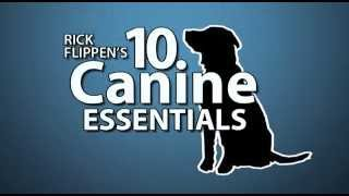 Good Dog! The 10 Canine Essentials