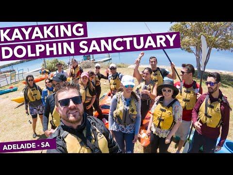 KAYAKING DOLPHIN SANCTUARY - ADELAIDE - SA