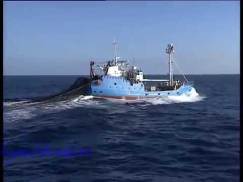 Tuna Fishing 85 Port Lincoln 150 Lbs Plus Fish Biggest Seen In My Years Fishing   YouTube