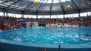 дельфинарий цирк в Сочи