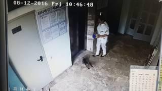 Собаку почти задавило дверцами лифта