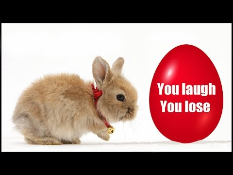 Try not to laugh or smile | Funny Bunny | 2018 ( Easter edition )