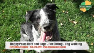 Happy Paws Cats and Dogs - Pet Sitting | Dog Walking | Dog Training