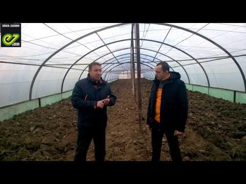 Отзыв фермера об огурце Бьерн. | выращивания | технология | выращивать | удобрения | обработка | засолка | уборка | огурца | огурец | полив