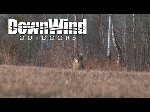Coyote Hunting: Vaporized (DownWind Outdoors)