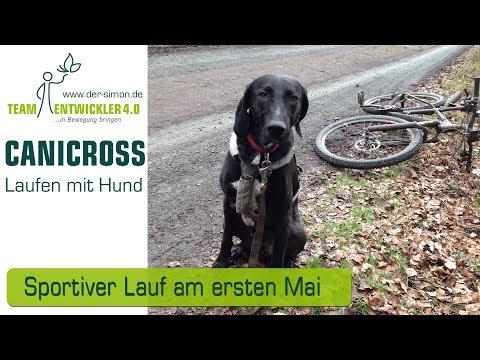 Canicross mit Laufhund Goofy und Bracke / Laufhund-Mischling Fred - nur Profis am Start
