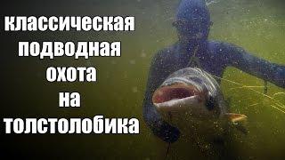 Классическая подводная охота на толстолобика(Подводная охота на толстолобика, это очень разнообразное и увлекательное занятие. Эта подводная охота..., 2014-10-04T12:15:13.000Z)