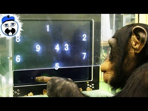 Download Youtube: 15 Times That Animals Outsmarted Humans