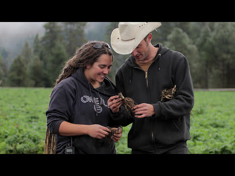 Organic Farming In The Trout Lake Valley