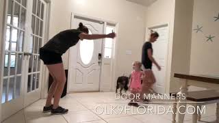 "8 Month Old German Shepherd ""Cocoa"" 