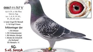 Hodowla Jurczyk poradnik hodowycy cz2 jak przygotować gołębie do lęgów
