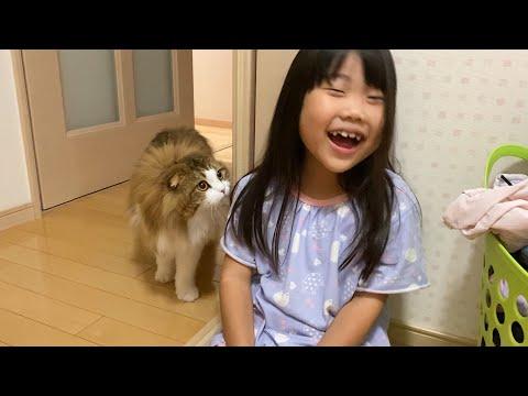 娘が爆笑すると気になってそ~と近付く猫【短編集】
