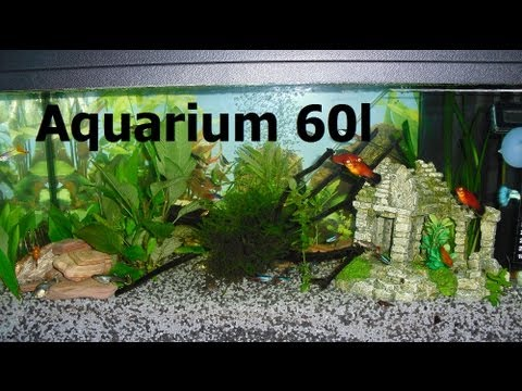 My fish 60 liter aquarium fische youtube for Aquarium boule 20 litres