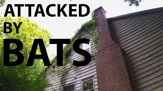 Video Abandoned House - Attacked by BATS   (Osmo Steadycam) download MP3, 3GP, MP4, WEBM, AVI, FLV Juni 2017