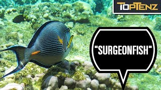 10 Freaky Fish That May Stab, Slice, or Spear You