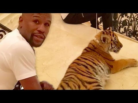 "Floyd Mayweather ""Gets Dragged Around By $2M Tiger In Moscow"""