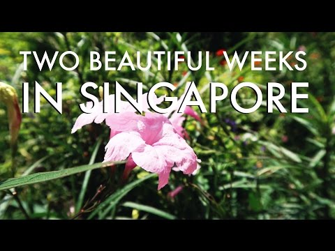 2 Weeks in Singapore: MUSEUMS // RESTAURANTS // TRAMPOLINE PARK // EARTHFEST